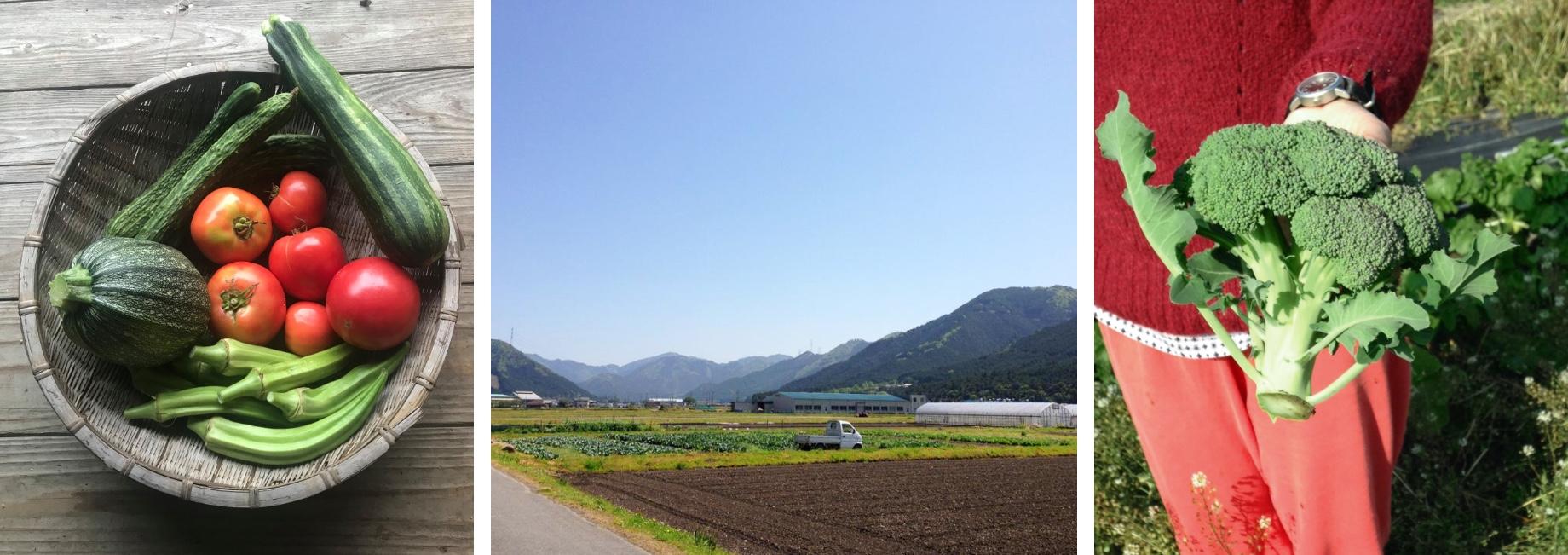 畑で収穫した野菜